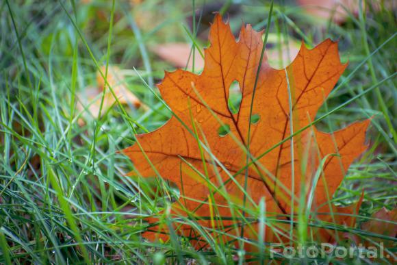 Jesienny lisć