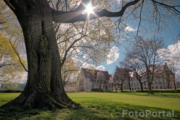 Wiosenne przebudzenie w cieniu Akademii #2
