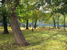 Poznański park