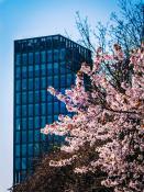 Bałtyk Tower i piękne kwitnące drzewo