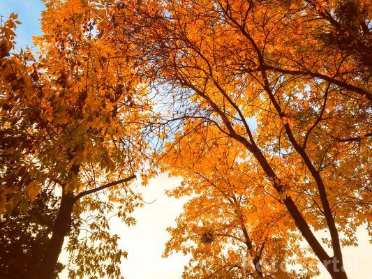 Więcej drzewek