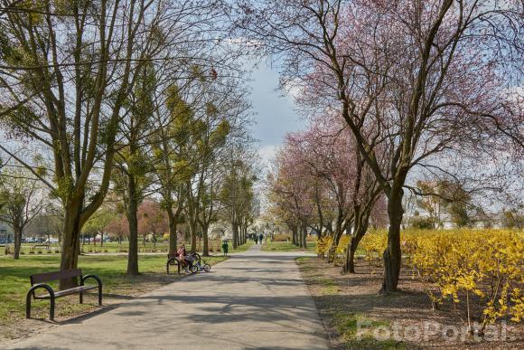 Słonecznie w Parku Władysława Czarneckiego