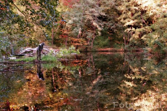 Poławiacz jesieni