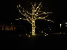Poznań miastem świateł