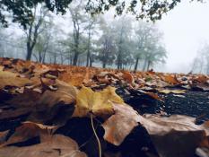 Poranna jesień