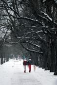 Zimowy spacer po Alei Wielkopolskiej