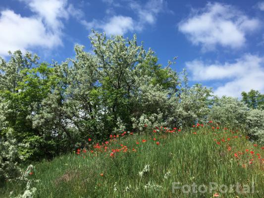 Wiosna na Winiarach