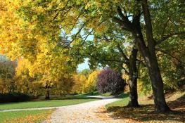 Cytadela jesienią