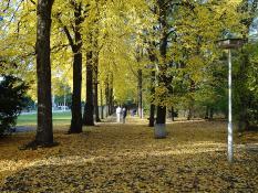 Jesienią chodzimy szurając...