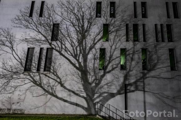wielki drzew