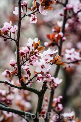 Kwitnienie