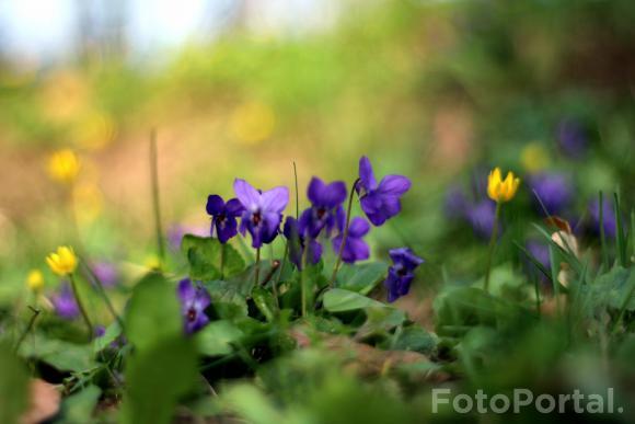 Wiosennie na Cytadeli