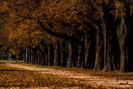 Jesienna aura zawitała do Poznania