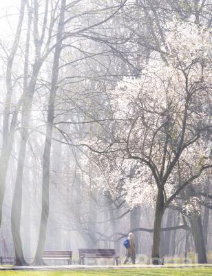 A wiosna przyszła pieszo...