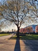 Wiosna w Parku Kasprowicza