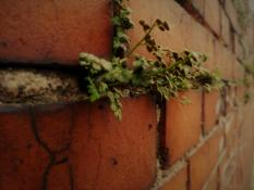 Jesienny żywy mur