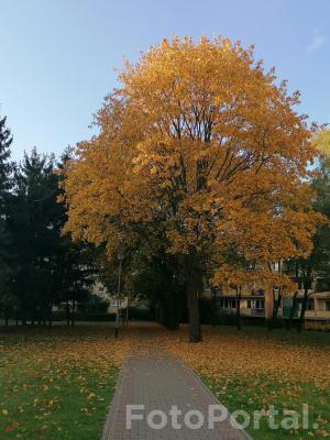 Jesienne barwy drzew