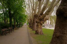 Tajemnicze Drzewa