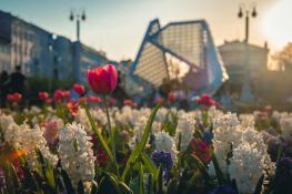 Wiosna na placu Wolności