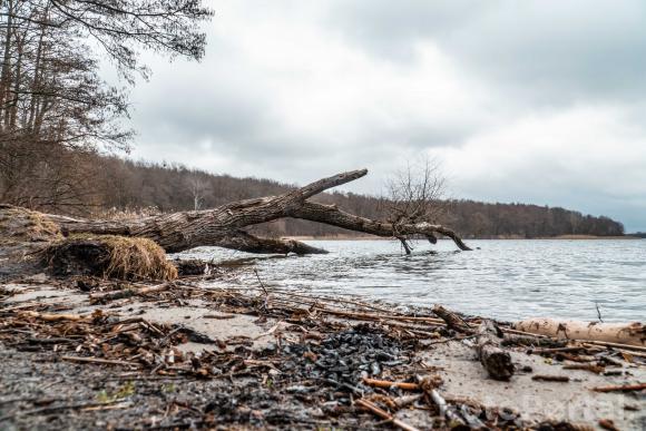 Przewalone drzewo na plaży